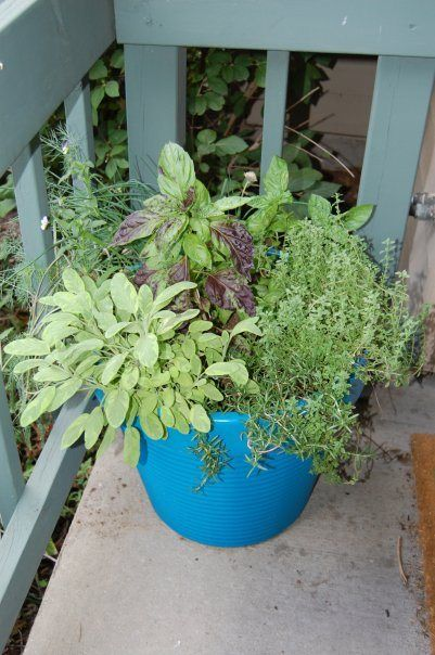 Herb Container- photo courtesy of KDL