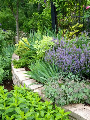 Garden tour tame a steep backyard terraced garden for Hillside landscaping plants