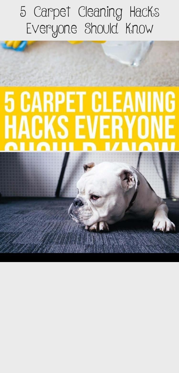 If your carpets take a beating from children, pets or clumsy adults, check out t...  If your carpets take a beating from children, pets or clumsy adults, check out these five inexpensi #adults #beating #carpets #Check #children #clumsy #Pets