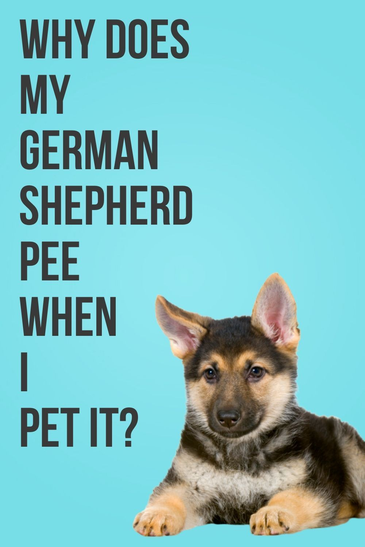 Pin on German Shepherd Tips