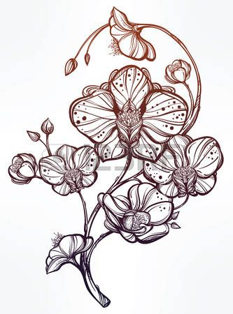 Dessin Tatouage Orchidee Kolorisse Developpement