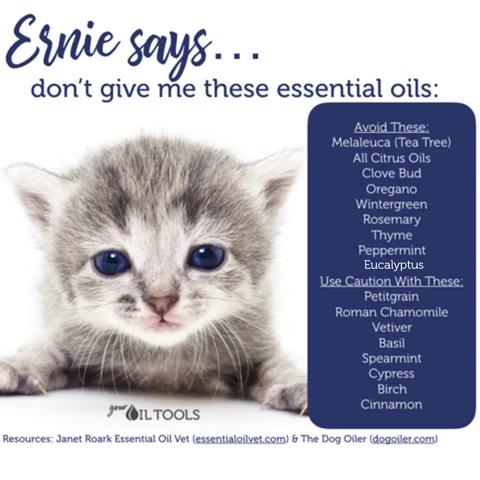 Essential Oils for Cats Essential oils, Are essential