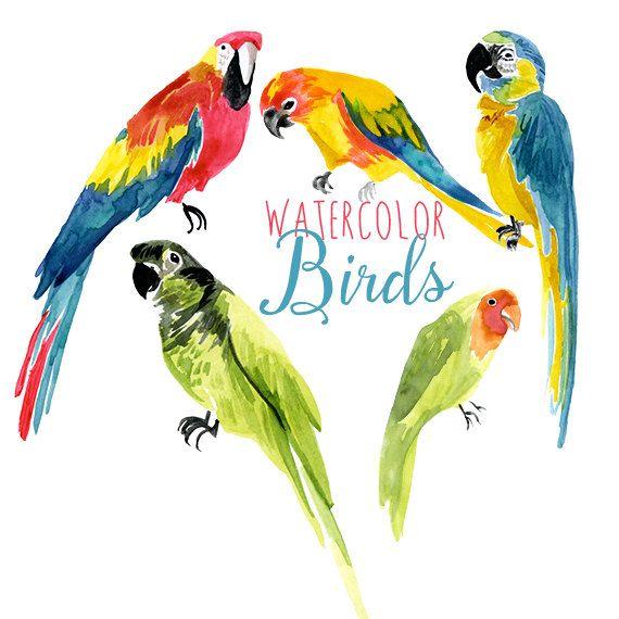Birds parrot. Watercolor tropical clip art
