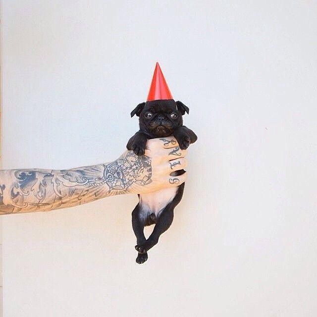 Todos listos para la fiesta? ❤️ Los esperamos HOY entre las 3 y las 5 de la tarde en @cielitolindocali en Santa Teresita, cra 1B oeste #6-38, Local 1, con todos sus hijos de 4 patas para celebrar el cumpleaños del Galgo! Tendremos muchas tortas para compartir  #PerroFeliz #chachayelgalgo #pasteleriacanina #paletasparaperros #amorperruno #mascotas #peluditos #alimentacioncanina #tortasparaperros #cumpleañosperruno #cumpleañosparaperros #YoCreoEnCali #cali #calico #colombia #pug #carlino