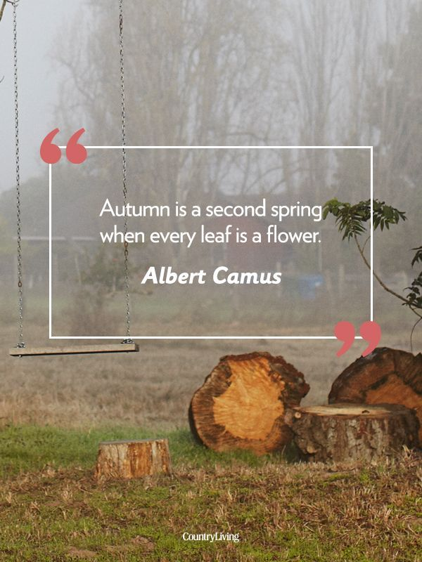 18 Quotes That Will Make You Fall in Love With Autumn