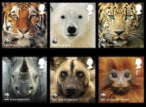 close up on endangered animals