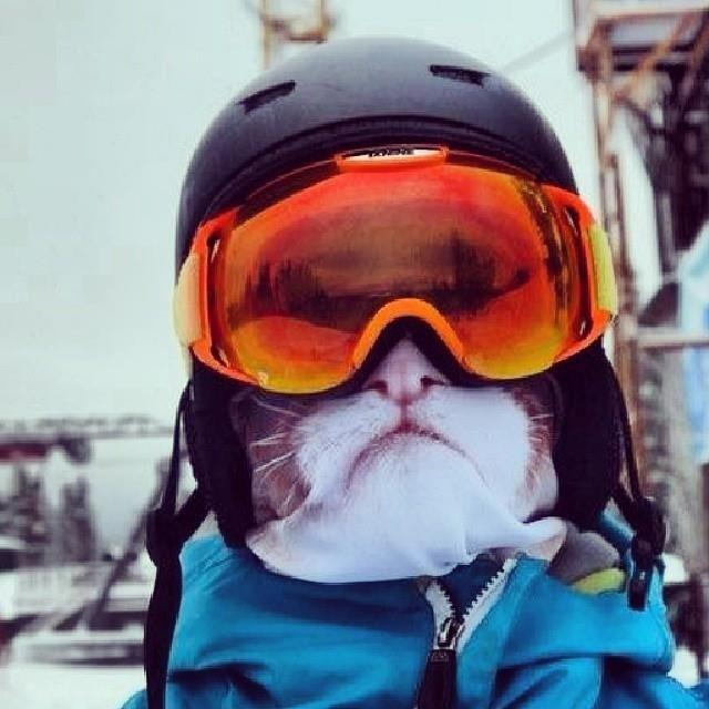 bc733b451649 Kitty snowboard mask!