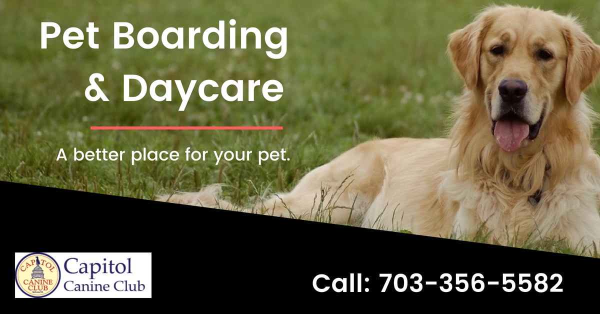 Specializing In Doggie Day Care And Dog Boarding In Mclean
