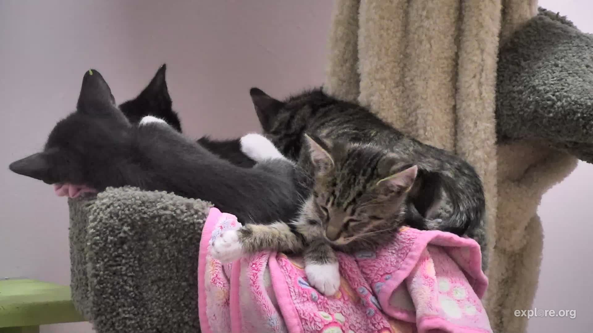 I M Watching The Kittenrescue Cam On Explore Org Streaming Live From Los Angeles Ca Snapshots Explore Los Angeles