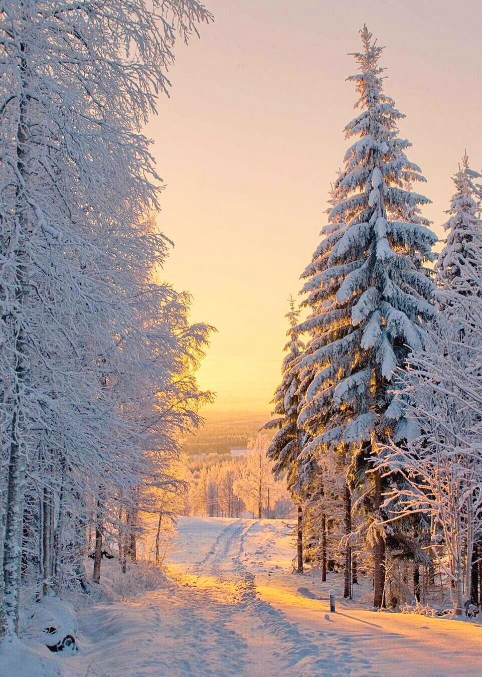 Winter Road Photographer And Location Unknown Cr Winter Nature Winter Pictures Winter Scenery