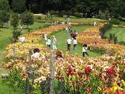 Ogród Botaniczny W Wojsławicach Ogrody Botaniczne Polska
