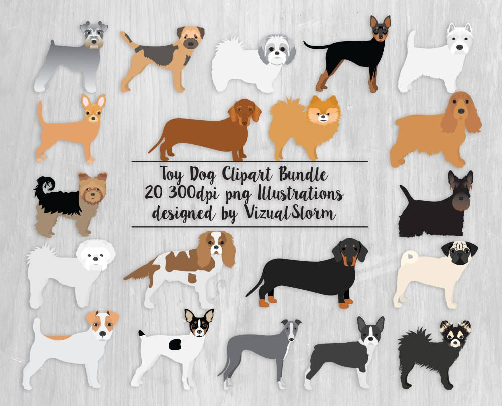 Png Toy Dogs Clipart Bundle 20 Small Dog Breeds Pug Pomeranian