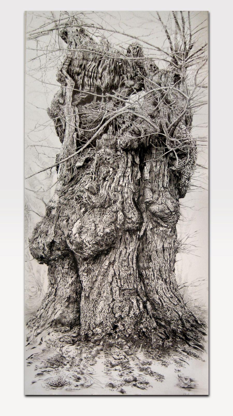 SUGAR MAPLE - Rick Shaefer -charcoal