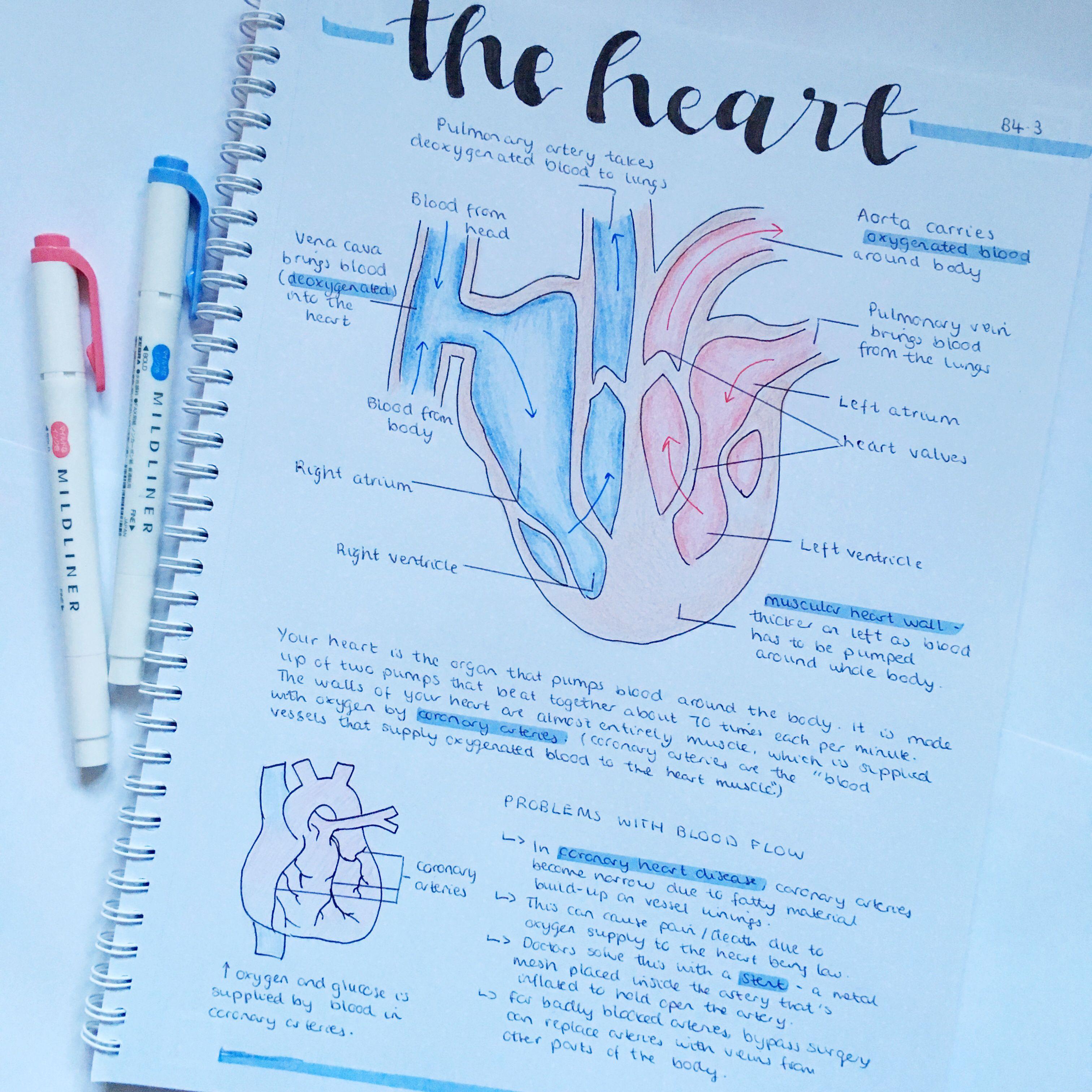 biology b4 aqa gcse combined science summary on the heart ...