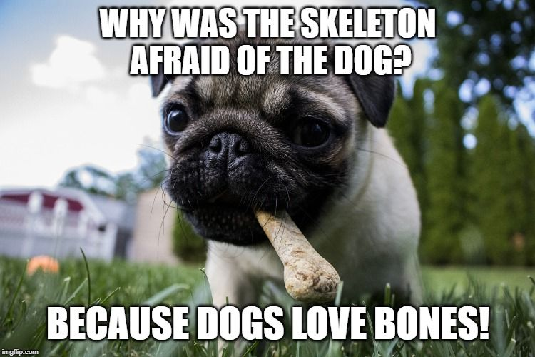Can You Imagine The Skeleton Being Scared Of The Tiny Pug Puppy