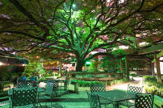 Beautiful The Live Oak Trees At The Becks Prime On Augusta Are A Houston Treasure.