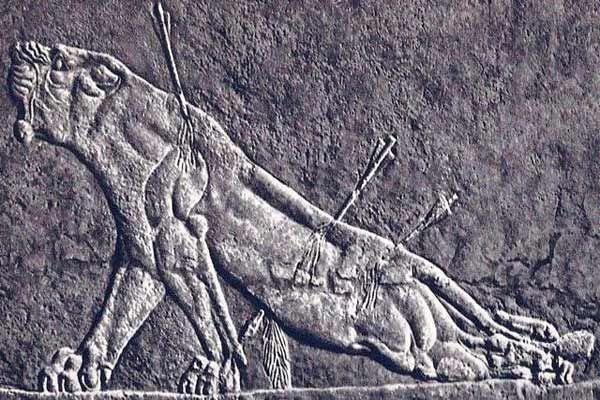 dying lioness assyrian art