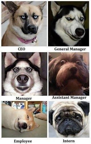 Se i tuoi #colleghi fossero...#cani #humour del venerdì. If your #colleagues were #dogs... #office #humour