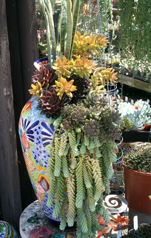 Succulents In Beautiful Mexican Pottery I Will Totally Want To Do