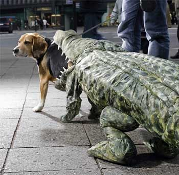 Crocodile Eating Dog Halloween Costume The Dog S Back Legs Are