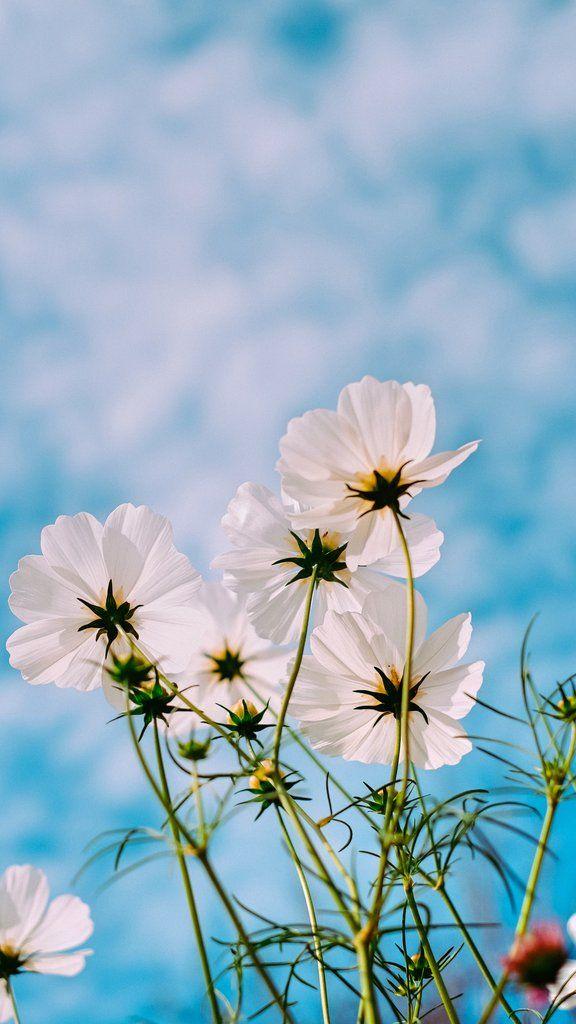 Top Ten Best Spring 2020 Wallpapers For Iphone X And Iphone 11 Flower Iphone Wallpaper Spring Landscape Photos Spring Pictures Spring wallpaper iphone 11