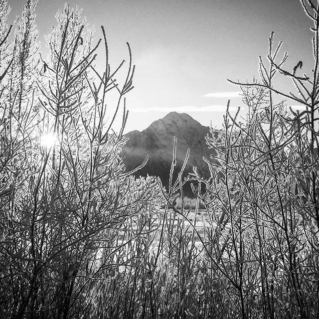 Pioneer Peak in Palmer, Alaska #alaska #mountains #ice #snow #frosty