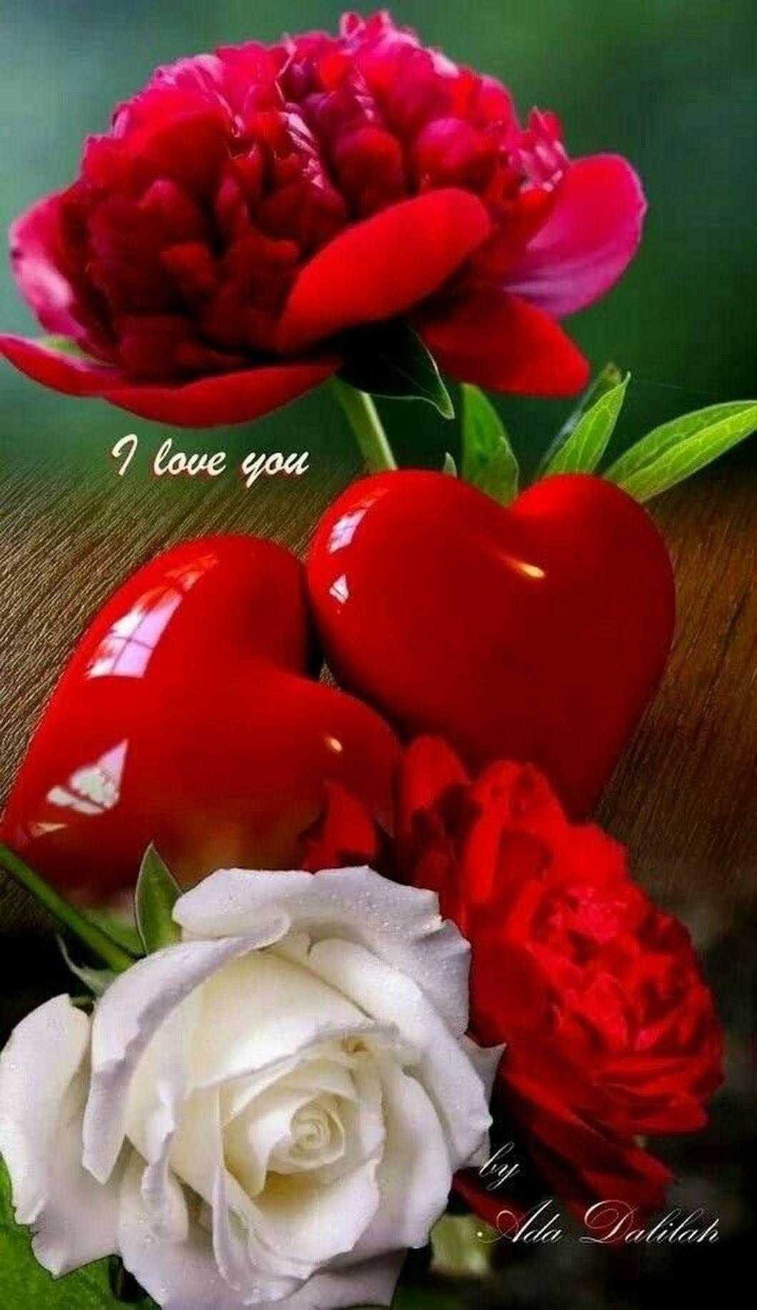 Boa Tarde Meus Amores Rosas Vermelhas Rosas Bela Rosa