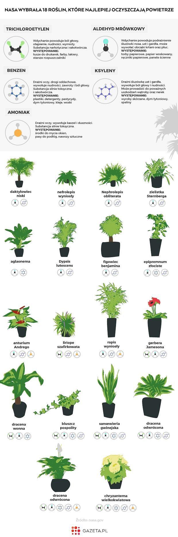 Nasa Wybrala 18 Roslin Ktore Najlepiej Oczyszczaja Powietrze Plant Identification Plants Side Garden