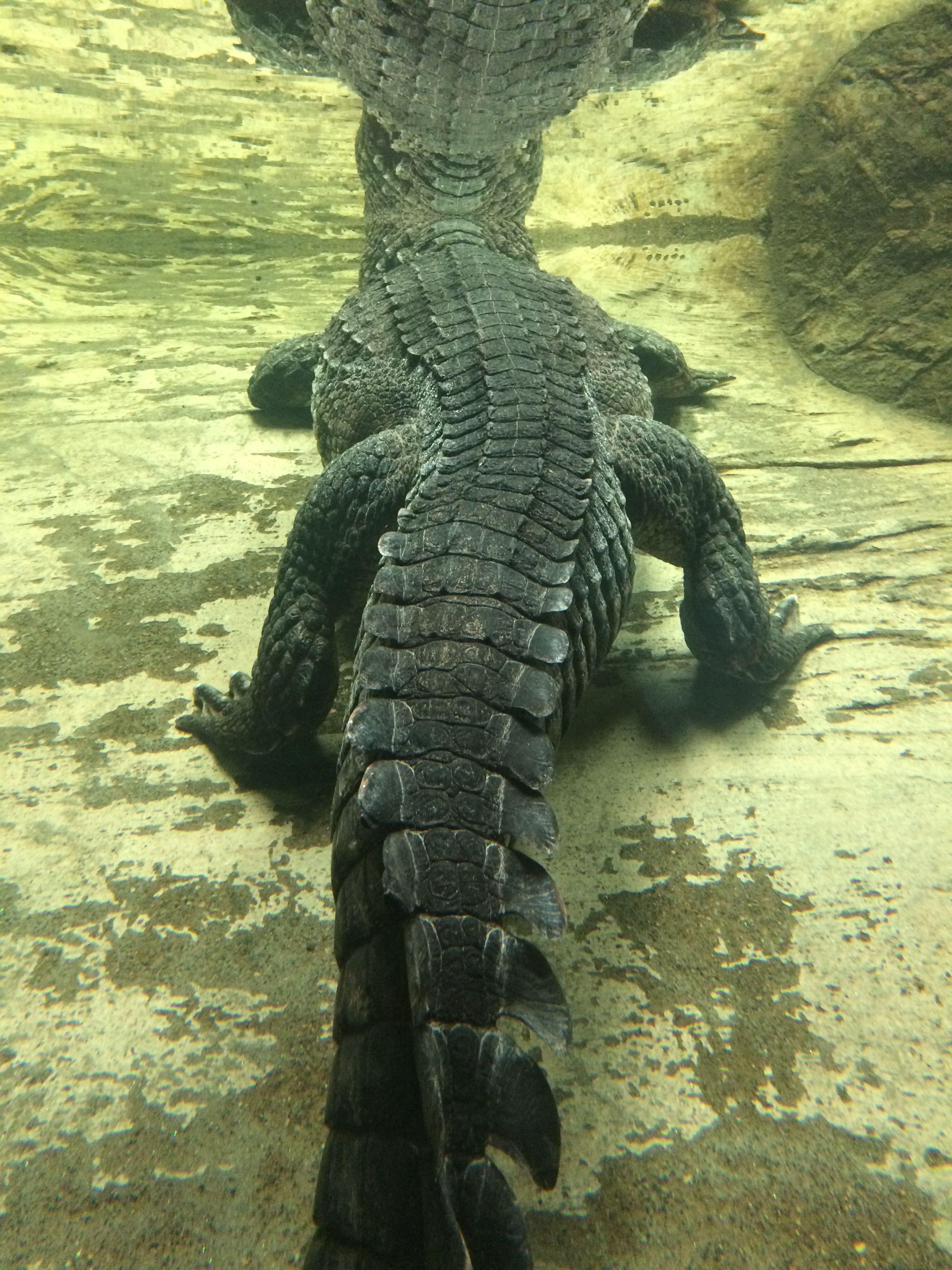 Pin de Derrick LaFramboise en Wildlife | Pinterest | Estudios ...