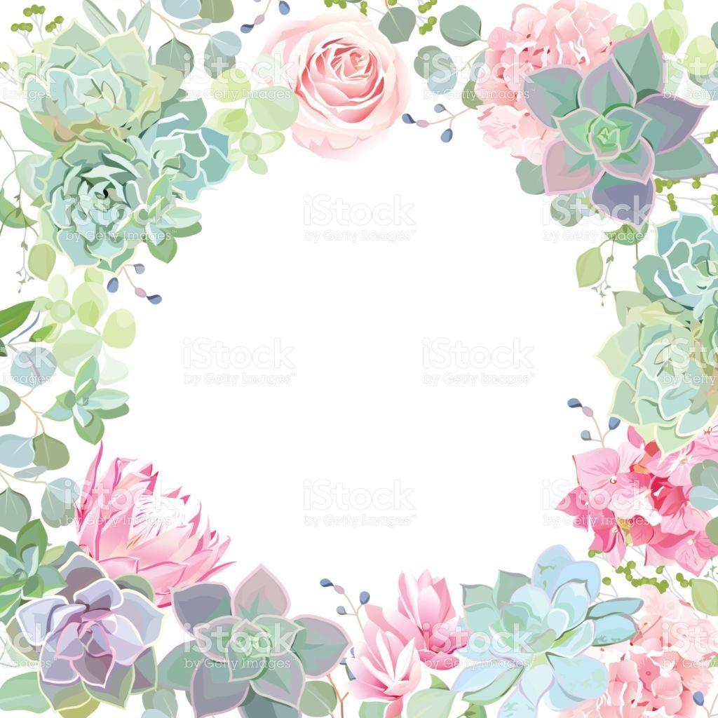 Green colorful succulents vector design card. Echeveria