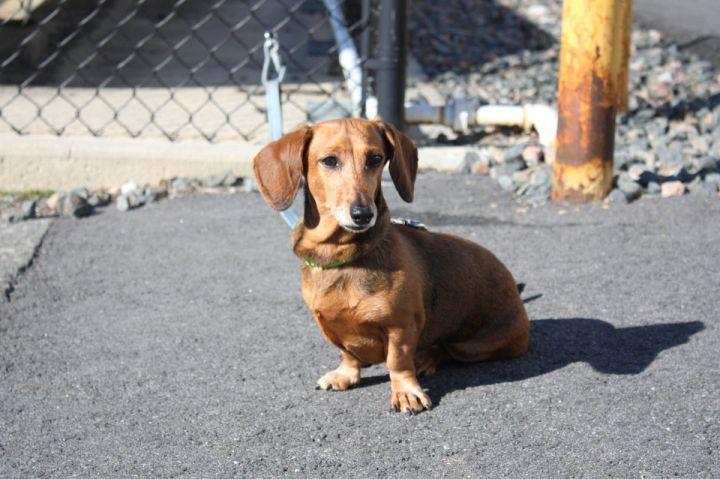 Shih tzu puppies for adoption in kansas city