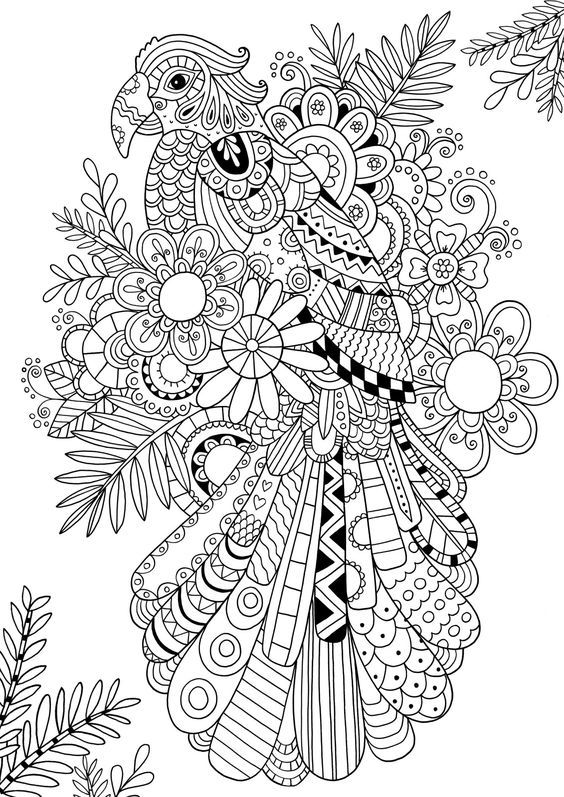 Coloring Pages For Adults Eagle Hawk Falcon Independence Day