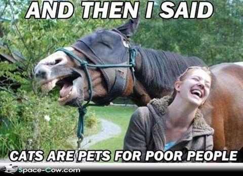 Horse jokes - photo#30
