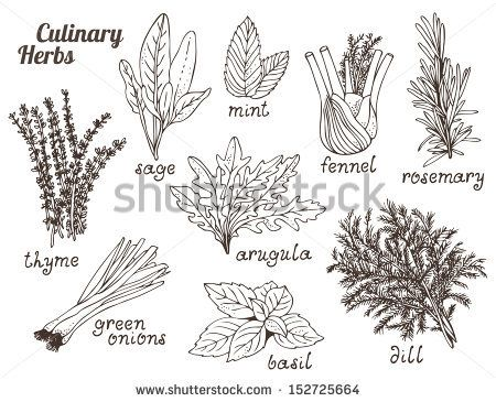 Culinary herbs on a
