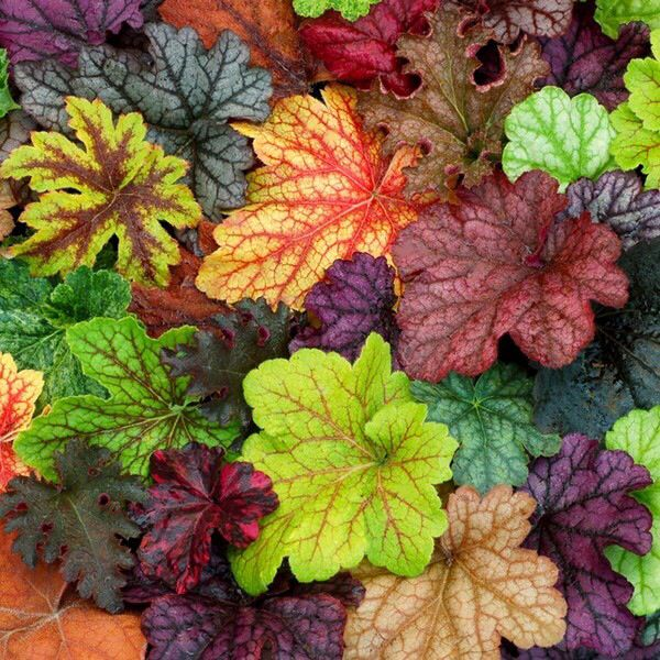 Shady Plants: Pretty Colors For Shady Area