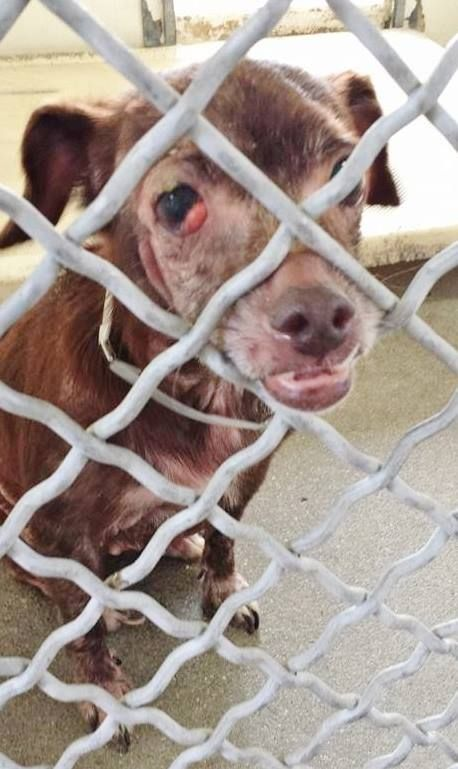 Pin By Tracy Fisk On Shelter Animals Rescue Dogs Animals Animal Shelter