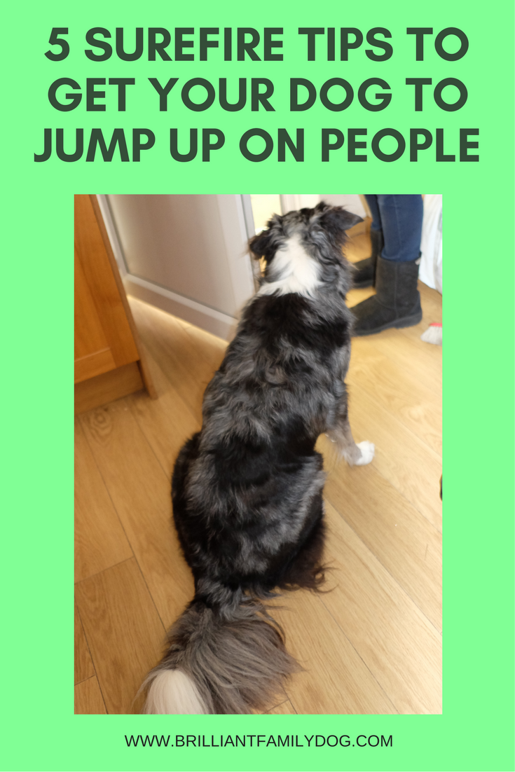 How to Get Your Dog to Jump Poles recommend