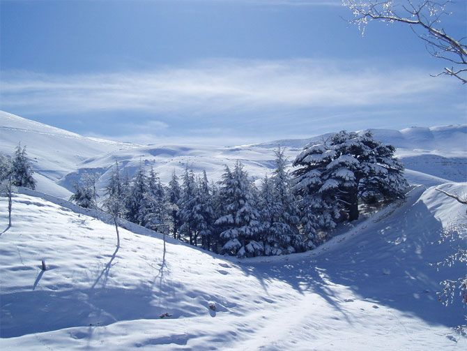 Lebanon Photography: Land of Cedars and Archeological Sites-AmO Images-AmO Images