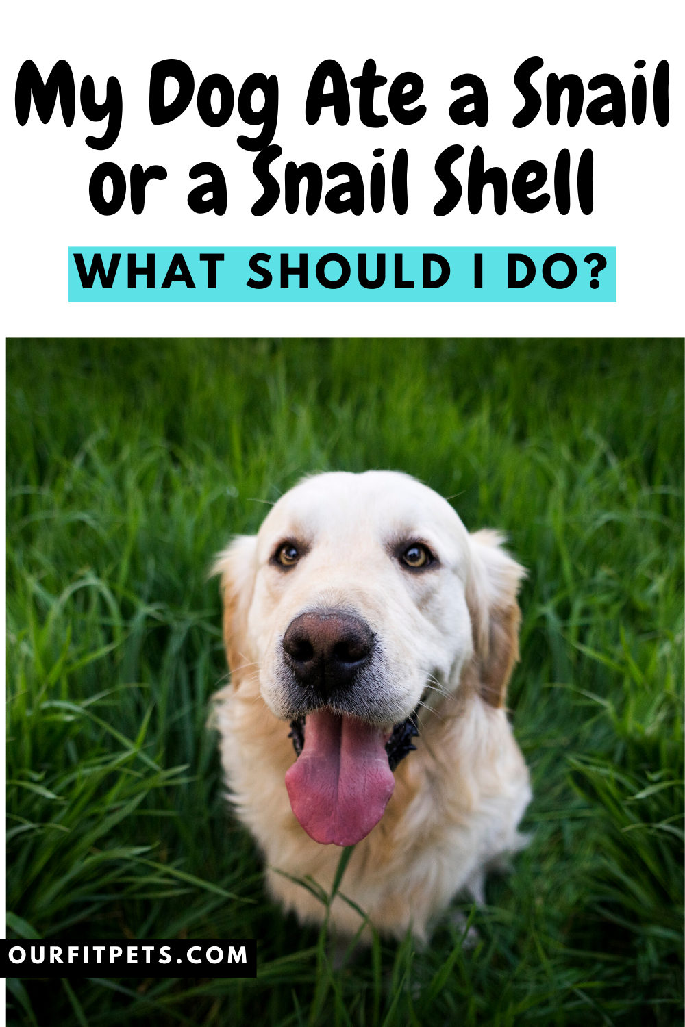 My Dog Ate A Snail Or A Snail Shell What Should I Do Our Fit Pets In 2020 Dogs Dog Eating Sick Dog