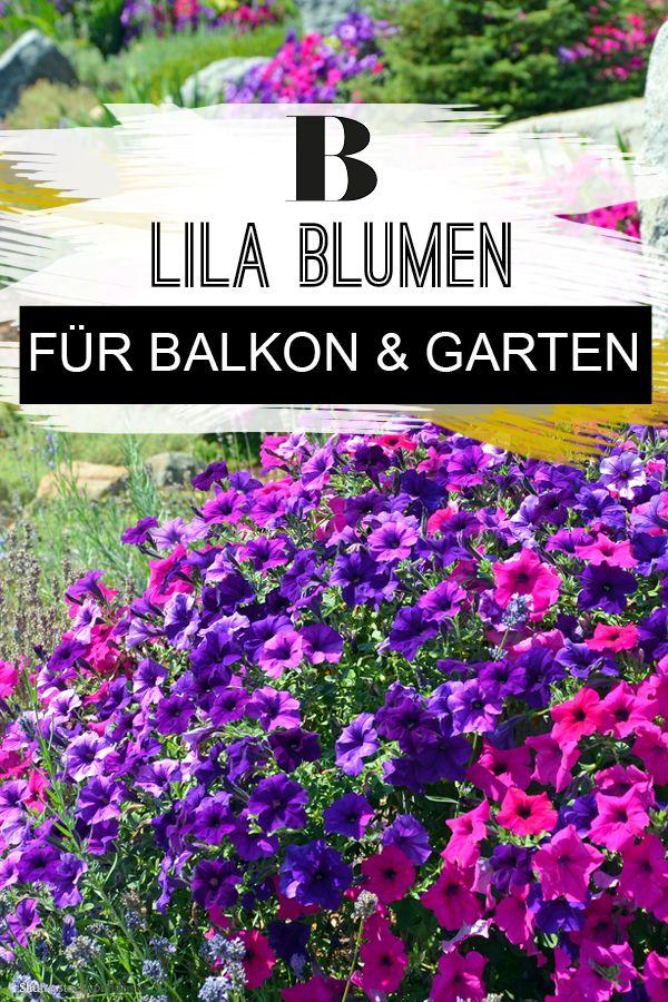 Lila blumen und pflanzen balkon garten lila blumen for Garten pflanzen blumen