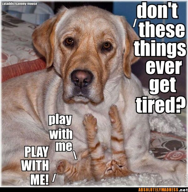 Funsubstance Funny Pics Memes And Trending Stories Old Dogs Dog Logic Dogs