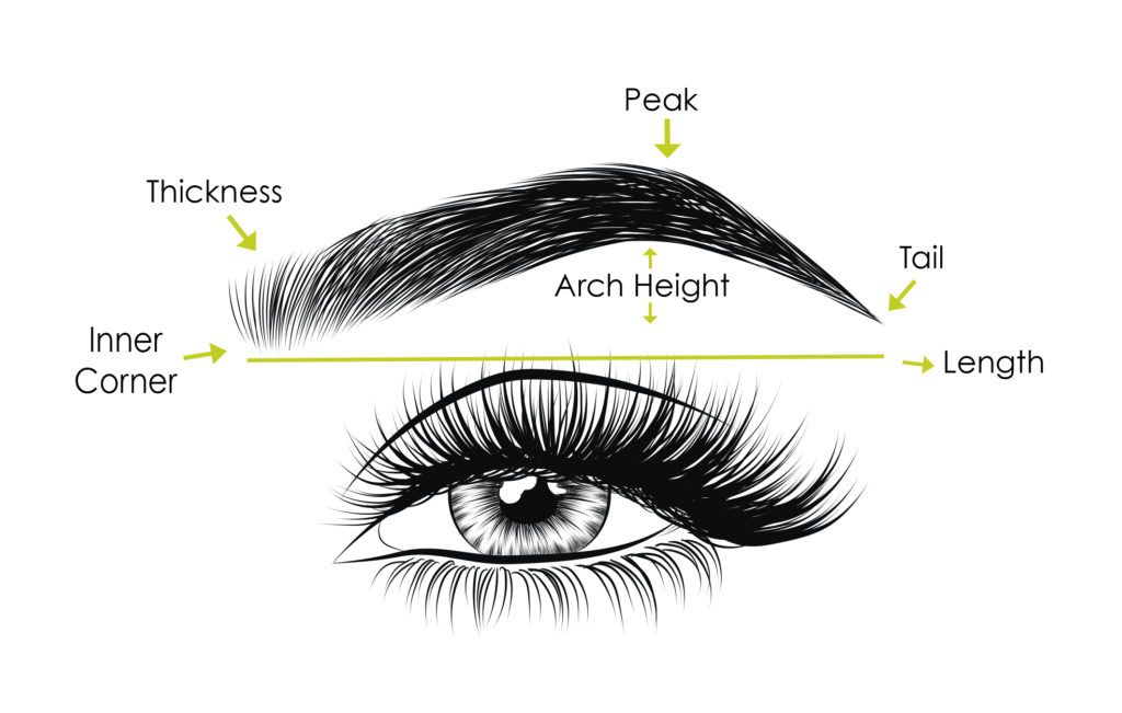 Anatomy of Eyebrow | Different Types of Eyebrows Shapes in ...