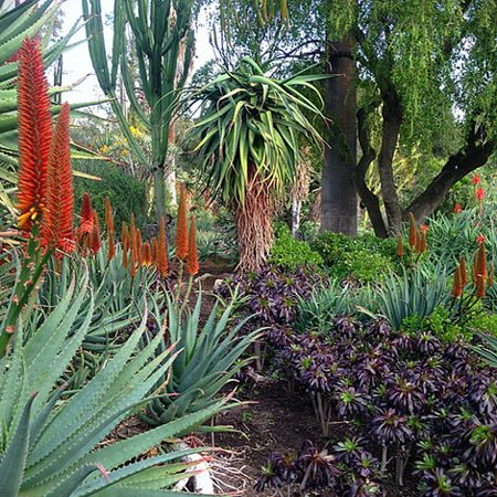 water wise indigenous South African garden WESTHOUSE GARDEN