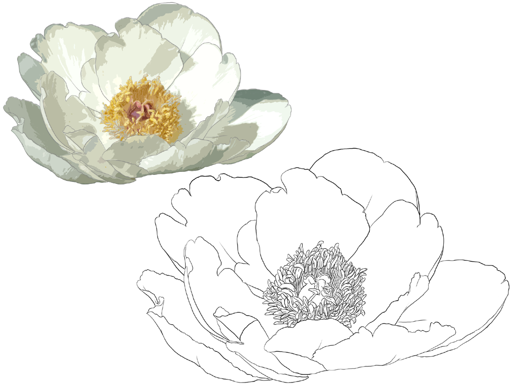 Nelumbo nucifera Illustration Handpainted lotus 1024