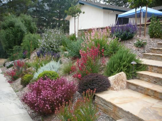 Drought resistant plants southern california deer for Drought tolerant front garden designs