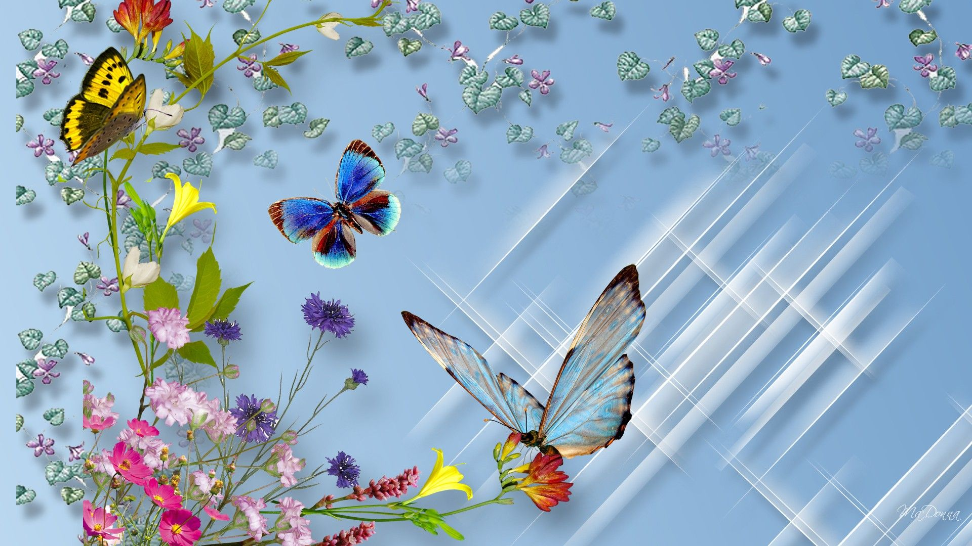 download flower and butterfly high definition wallpaper snj4e