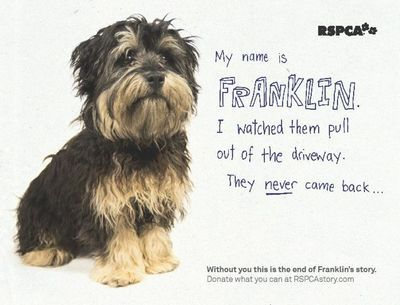 Image Result For Rspca Advert Animals Animal Cruelty Image