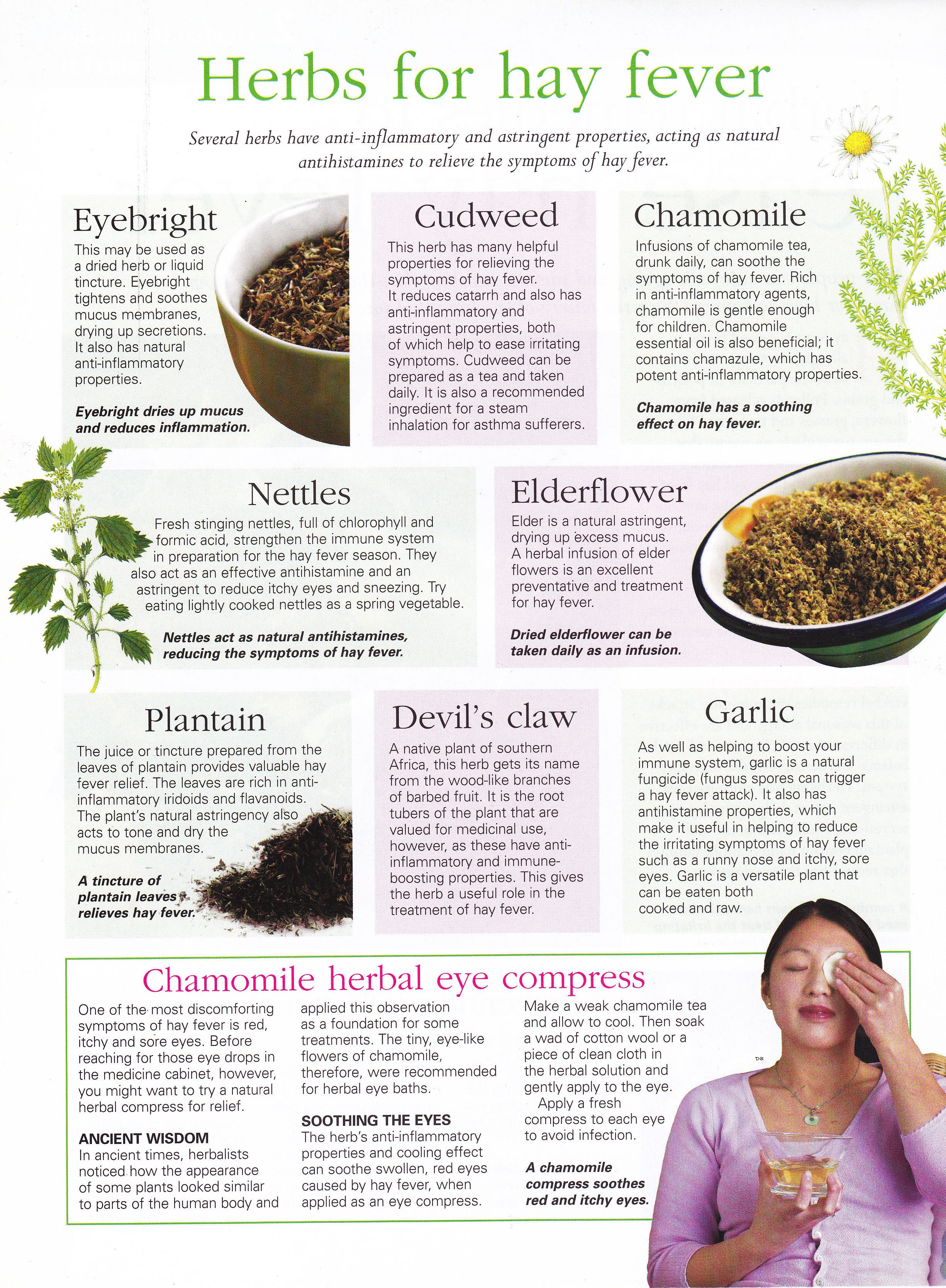 Herbs Herbs For Hay Fever I Dont Suffer From It But Its Interesting To Know Herbalism Herbs For Health Herbal Medicine