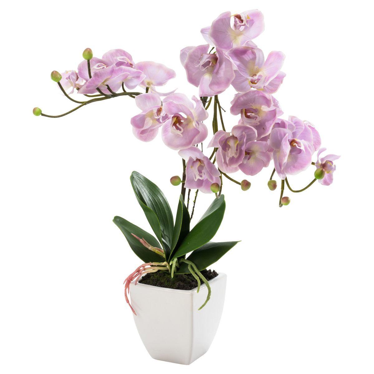 Kunstpflanze Orchidee Nachtfalter, Natur-Look Jetzt bestellen unter: https://moebel.ladendirekt.de/dekoration/dekopflanzen/kunstpflanzen/?uid=4fab6fd6-6a61-5aca-8c65-e1952fb1f2c4&utm_source=pinterest&utm_medium=pin&utm_campaign=boards #dekopflanzen #kunstpflanzen #dekoration
