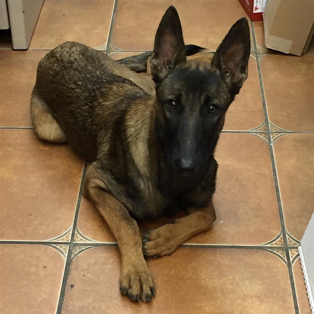 Found Dog Unknown Homestead Fl Usa 33031 On September 09